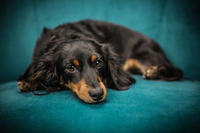 Kutyatáp rendelést olcsón is meg tudsz oldani